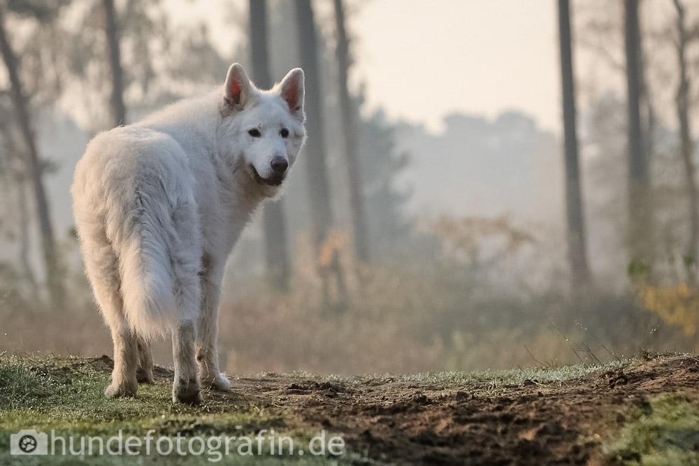 hundespaziergang-1