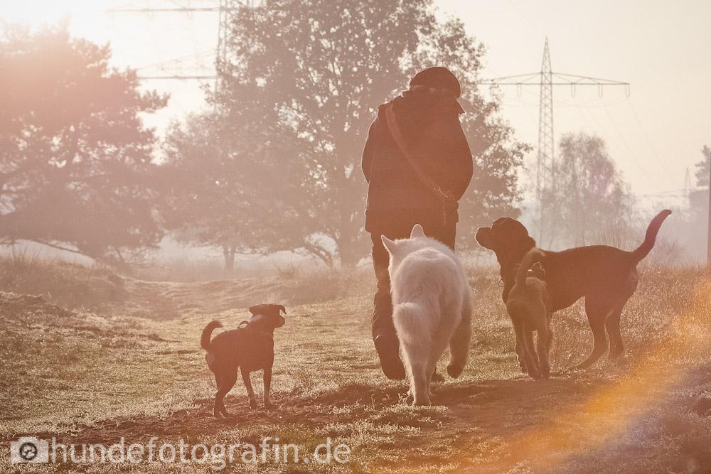 hundespaziergang-3