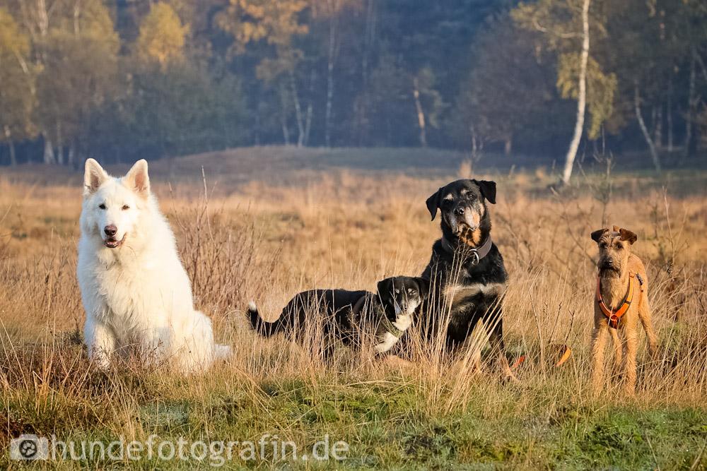 hundespaziergang-4