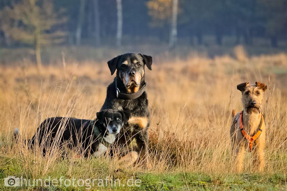 hundespaziergang-5