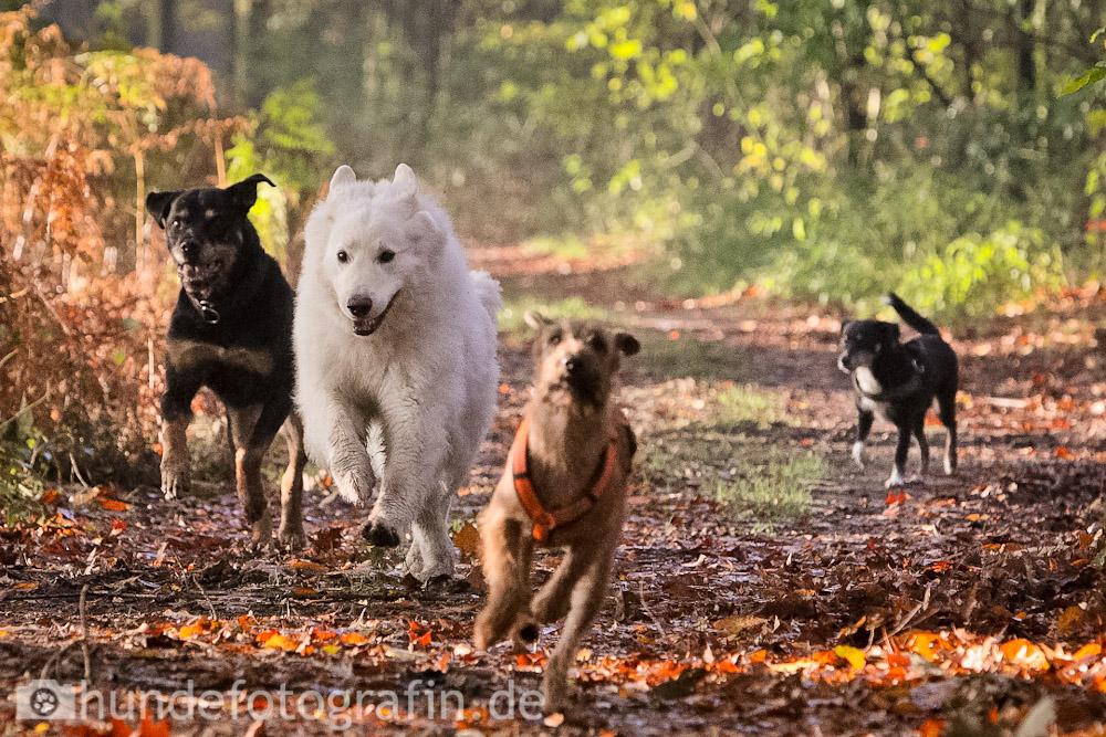 hundespaziergang-6