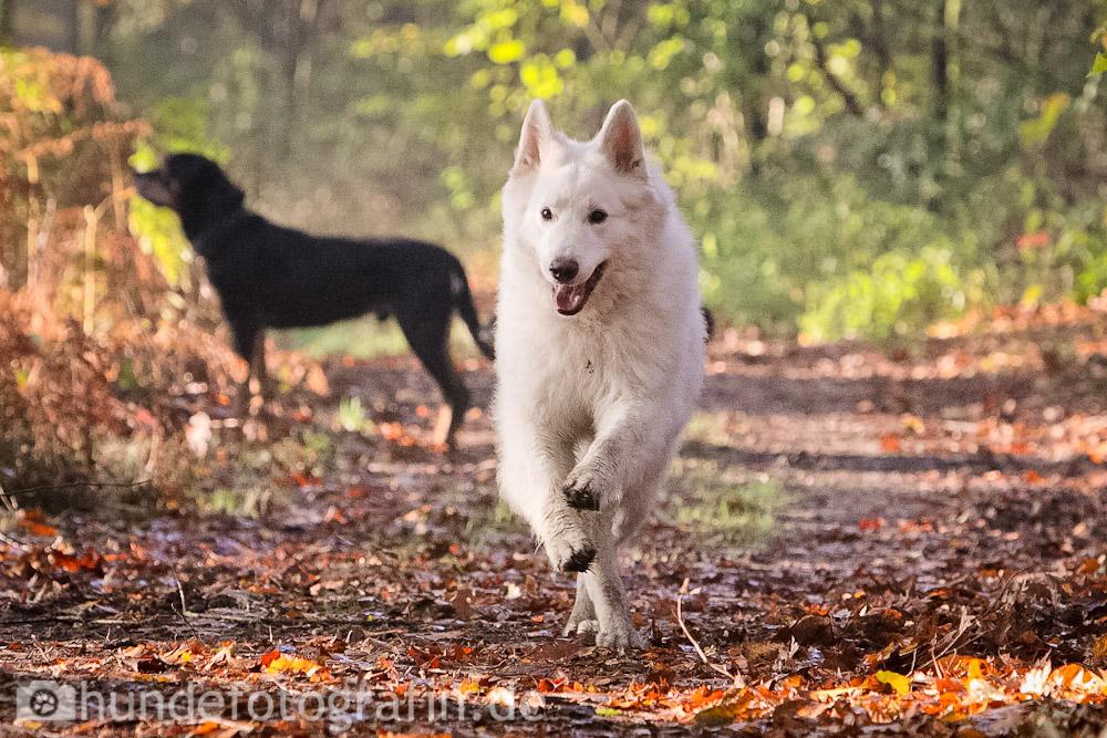hundespaziergang-7