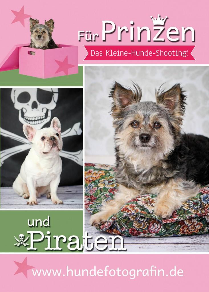 kleine_Hunde_vorne