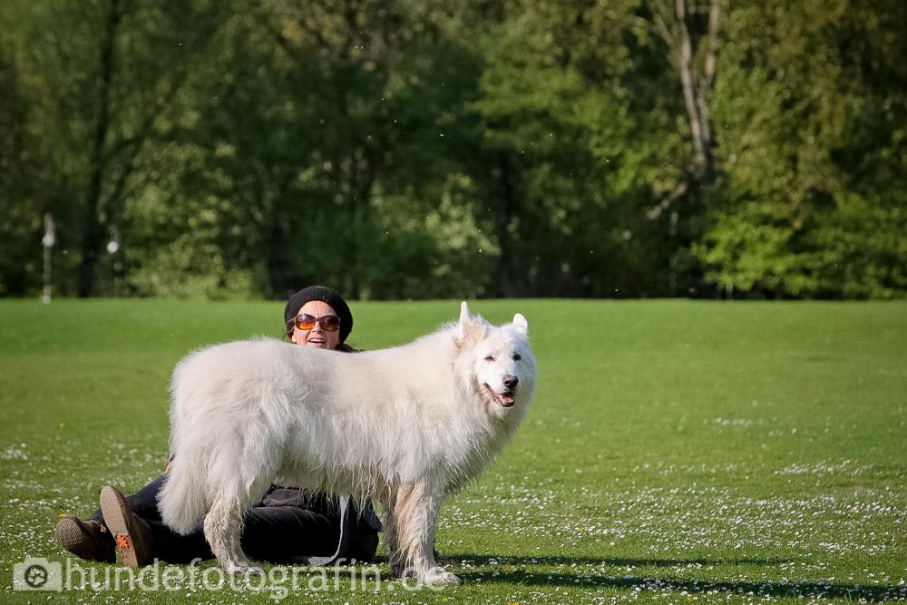 weißer_schaeferhund-118
